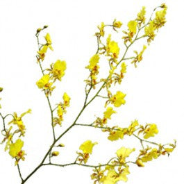 Orchids Oncidium - BloomsyShop.com
