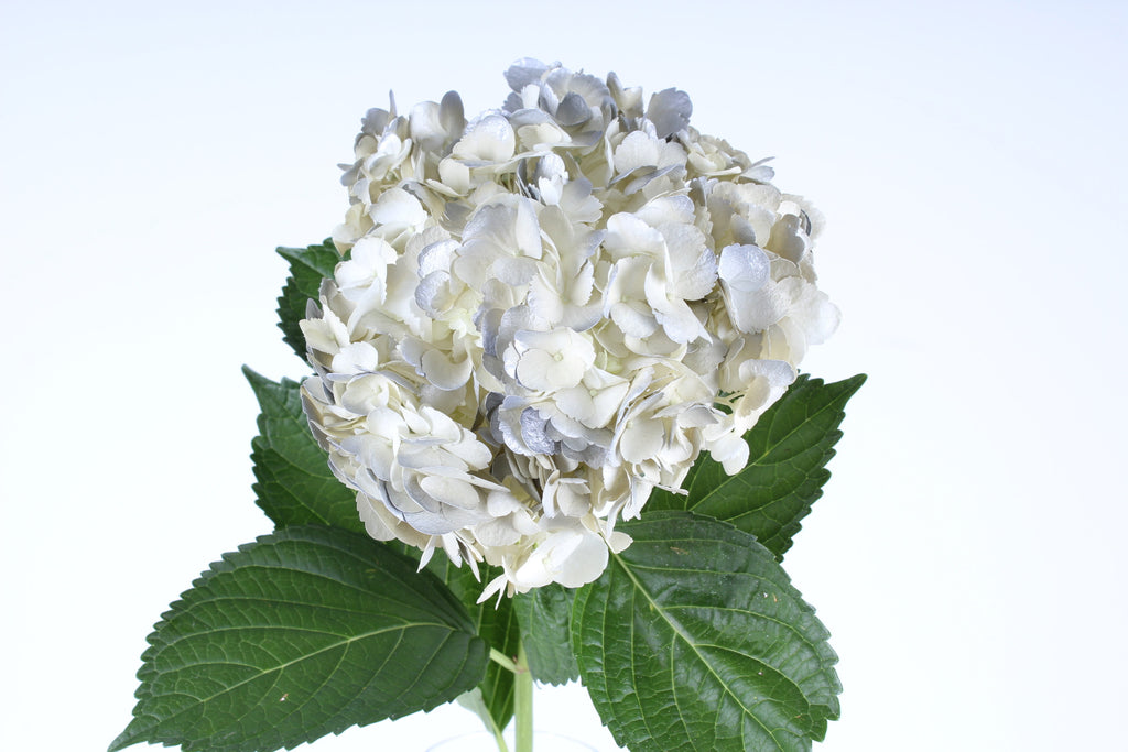 Hydrangea Airbrushed Vintage Silver