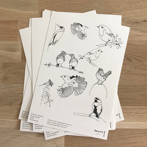 Birds - activity & colouring set