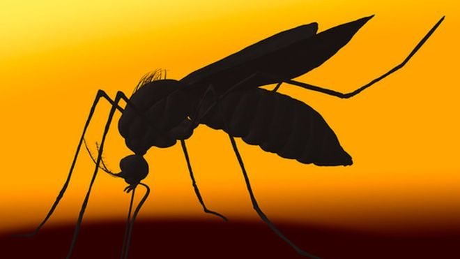 New mosquito carries Zika Virus!