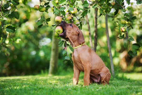 10 Healthy Snacks to Share With Your Dog