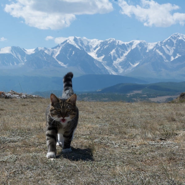 Preschoolers Can't See the Mountains for the Cat