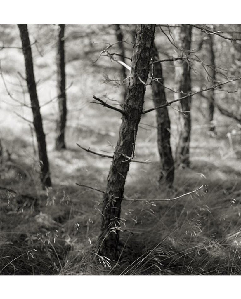 Large Original Print by Eric Lindbloom Titled 'Pine Woods #37' (Unframed) - Matthew Izzo Home