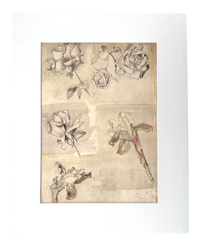 19th Century Botanical Drawing - Matthew Izzo Home