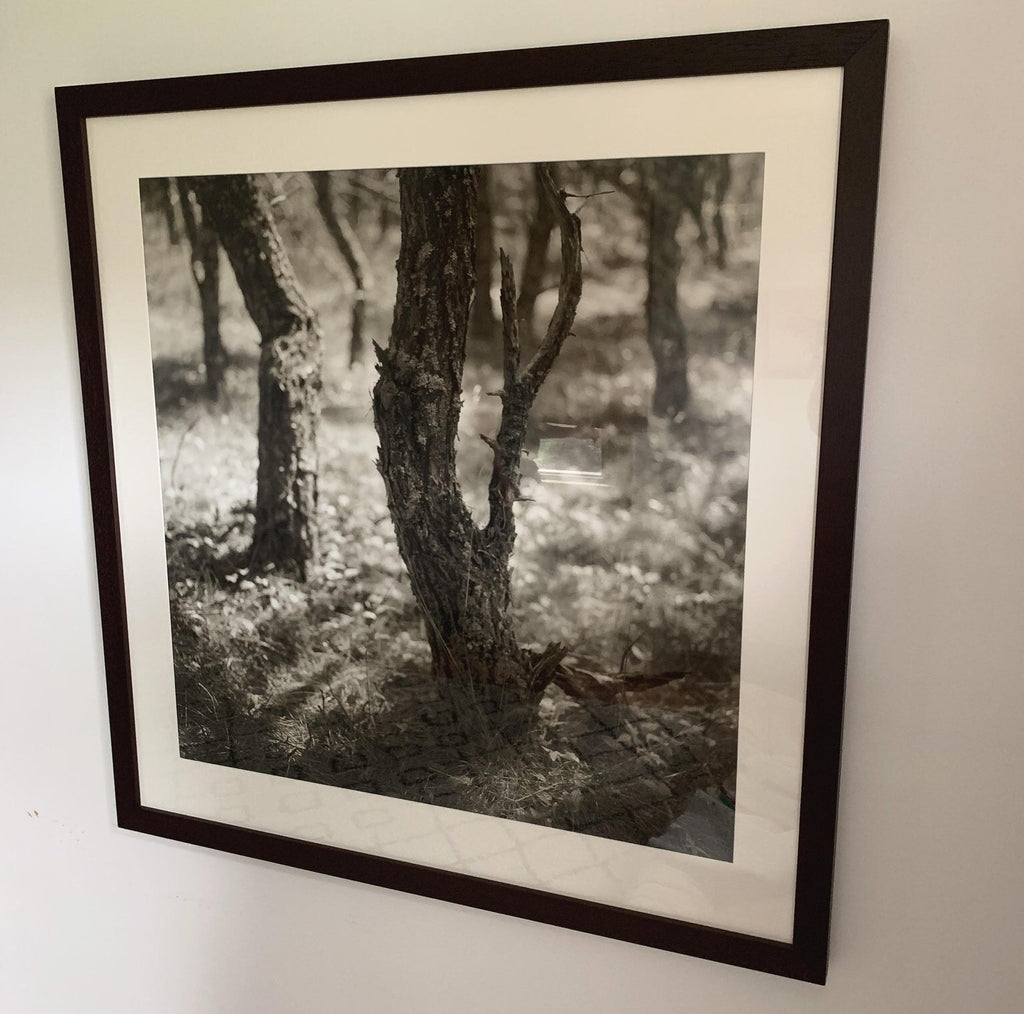 Large Original Eric Lindbloom Titled 'Pinewoods 28' (Framed) - Matthew Izzo Home