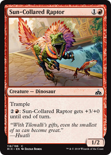 Sun-Collared Raptor - Common - RIX118 Wizards of the Coast | Cardboard Memories Inc.