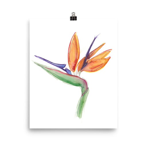 Bird of Paradise Flower Print