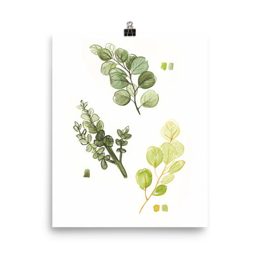 Eucalyptus Leaves Print