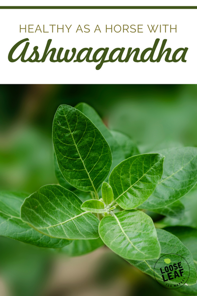 Stay healthy with ashwagandha pinterest