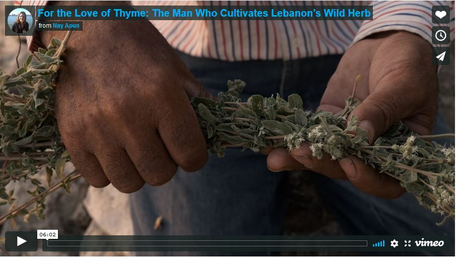 For the Love of Thyme – Six-minute film documentary on sustainability and cultivation of the wild zaatar herb in Lebanon