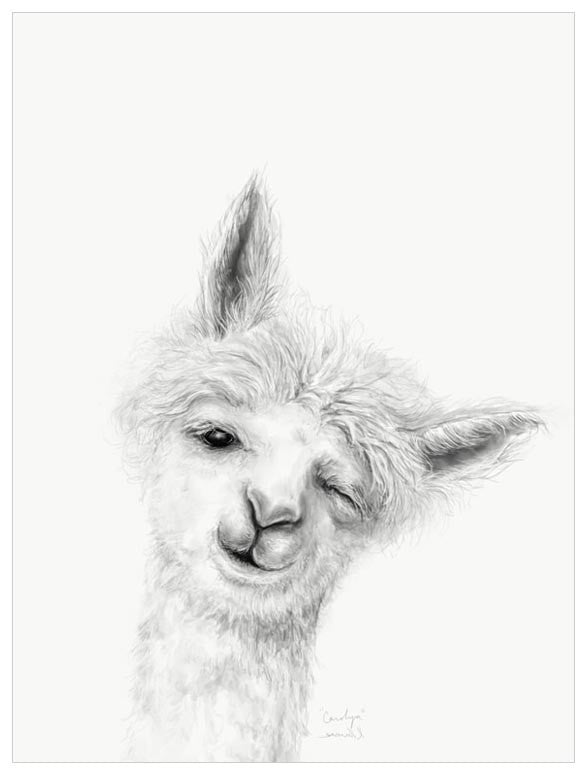 Green Box Carolyn The Llama Medium Canvas