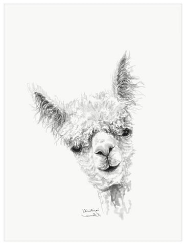 Green Box Christina The Llama Medium Canvas