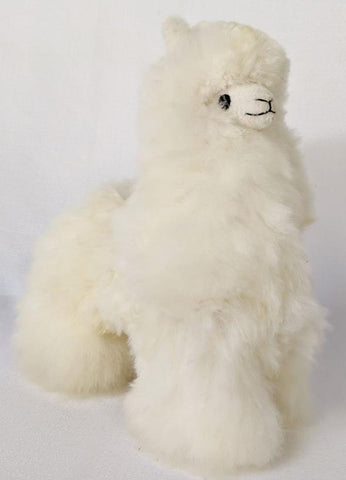 Frankie Medium Llama In White