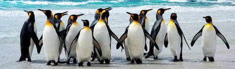 Penguin facts, penguins, facts about penguins