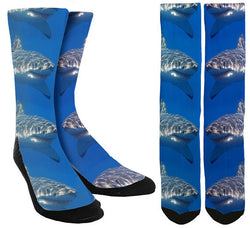 Shark Socks - SockAndShop