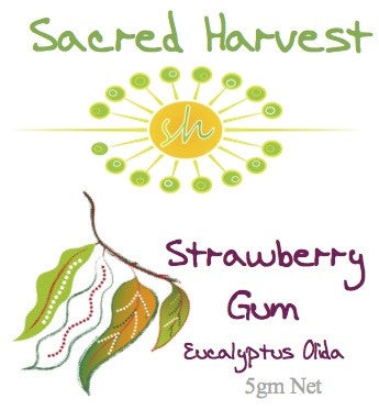 Strawberry Gum Ground 30gm