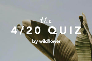 Test your CBD knowledge with Wildflower