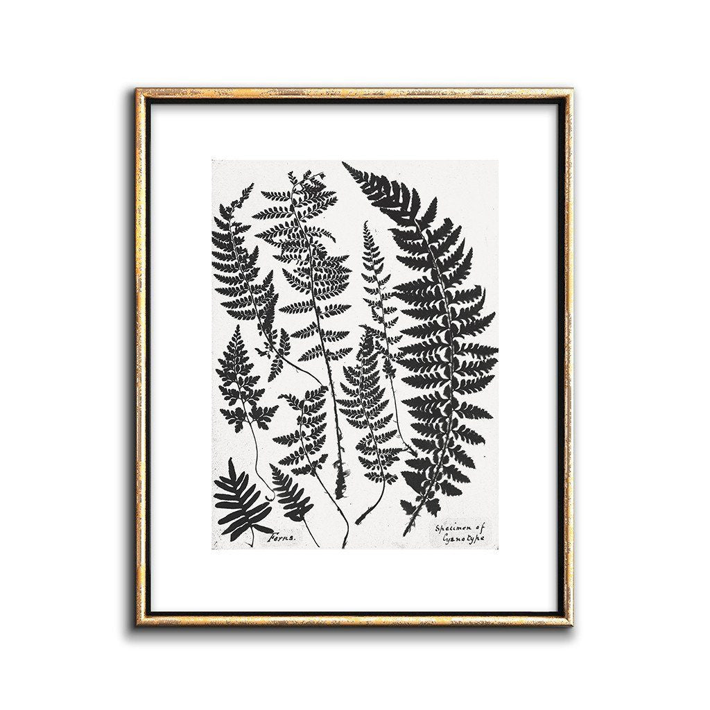 black and white botanical print fern art