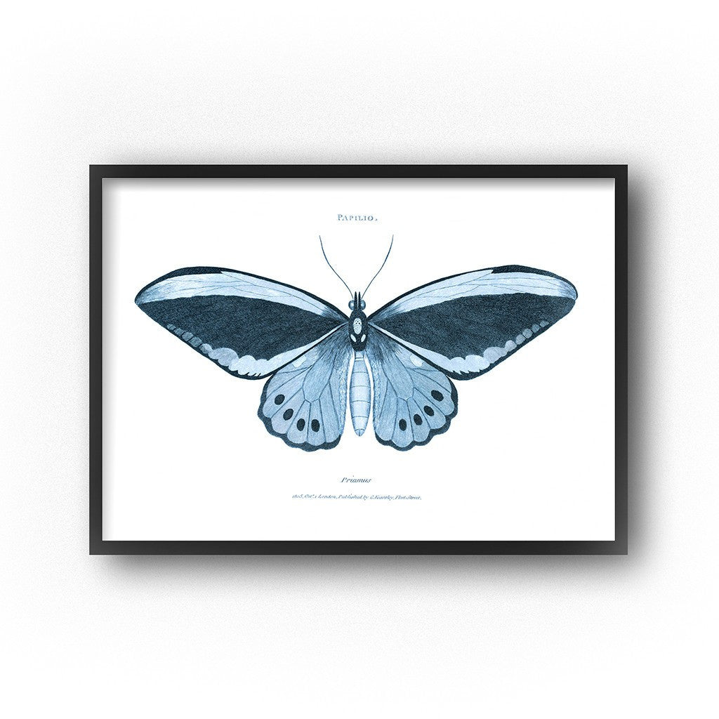 large wall art blue butterfly art print