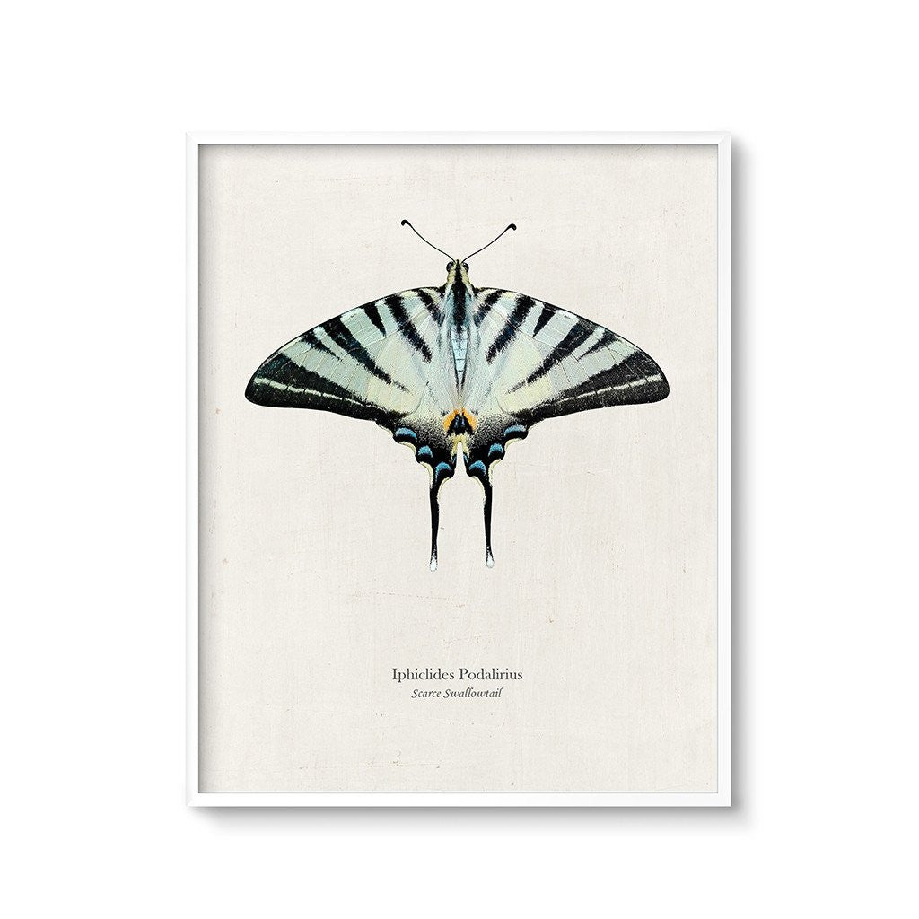 scarce swallowtail butterfly wall art printable