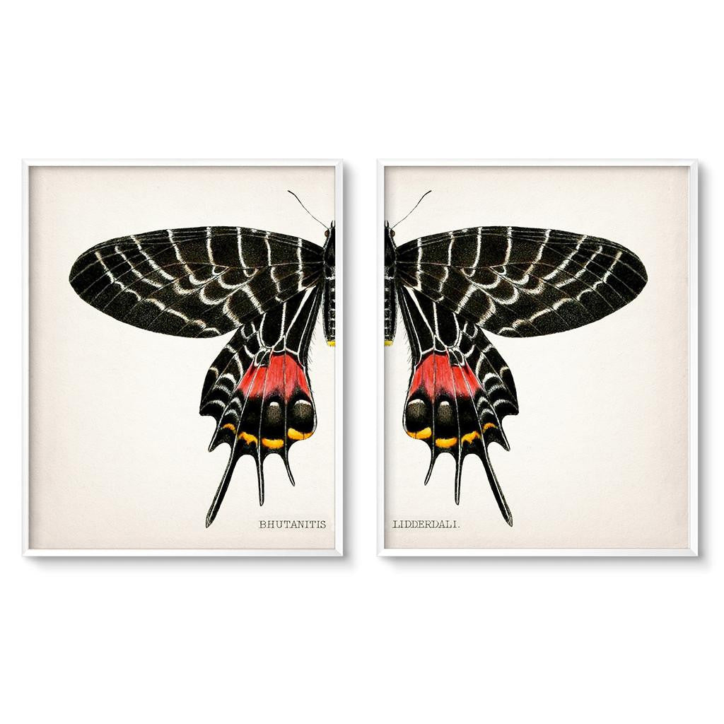 vintage butterfly illustration wall art set