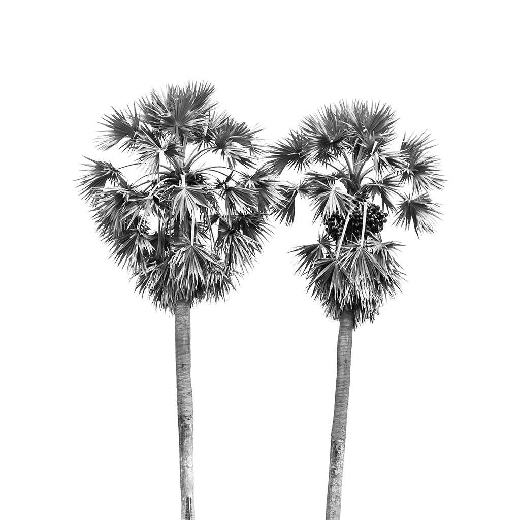 photograph about Palm Tree Printable identify Black and White Palm Trees Coastal Tropical Printable Artwork