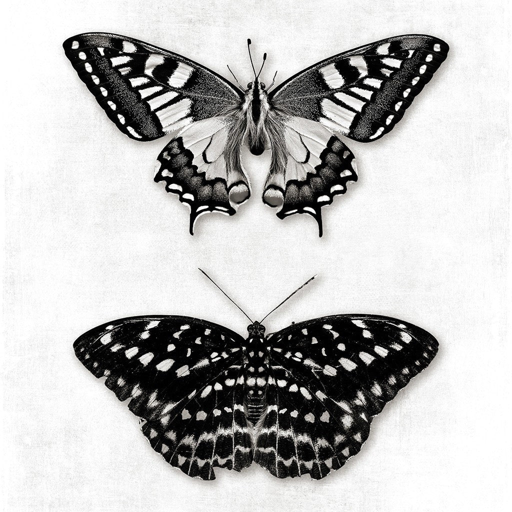 Butterfly Art Prints Printables Black and White Gallery ...