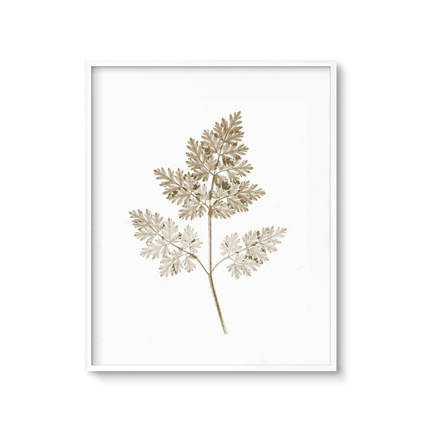 contemporary botanical art sepia fern printable