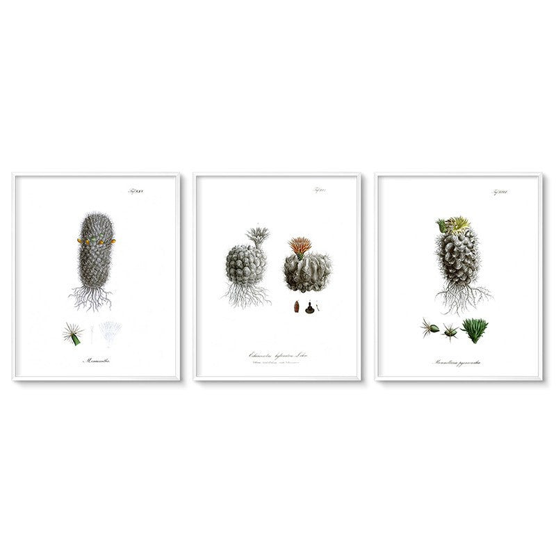 Triptych wall art set of 3 cactus botanical illustrations