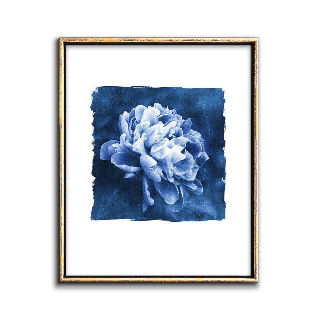 modern cyanotype print collage of a white peony flower