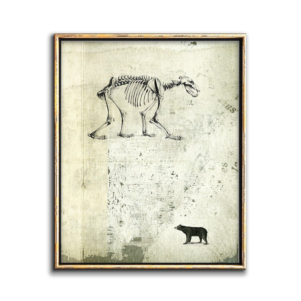 bear illustration collage art cabinet of curiosities style