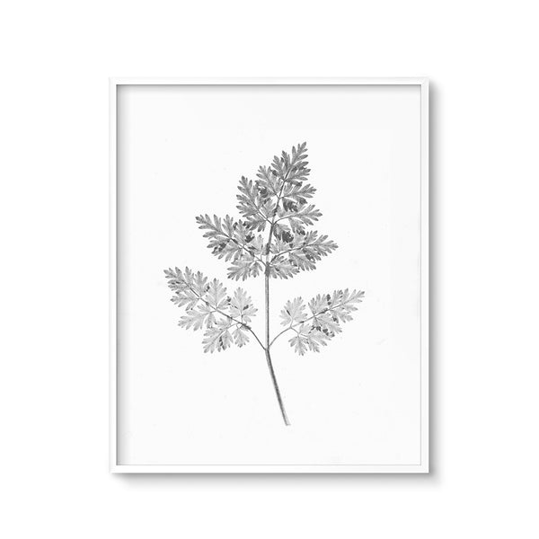 Modern Botanical Art Printable Black and White Fern Print