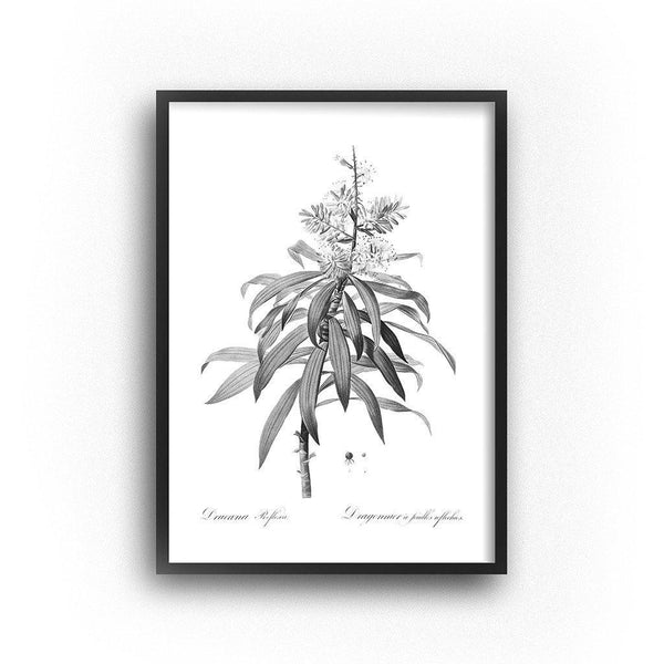 vintage black and white botanical illustration tropical tree