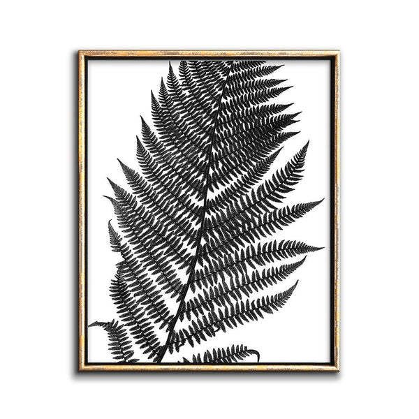 black and white fern art print