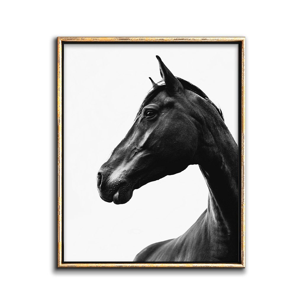 black horse wall art