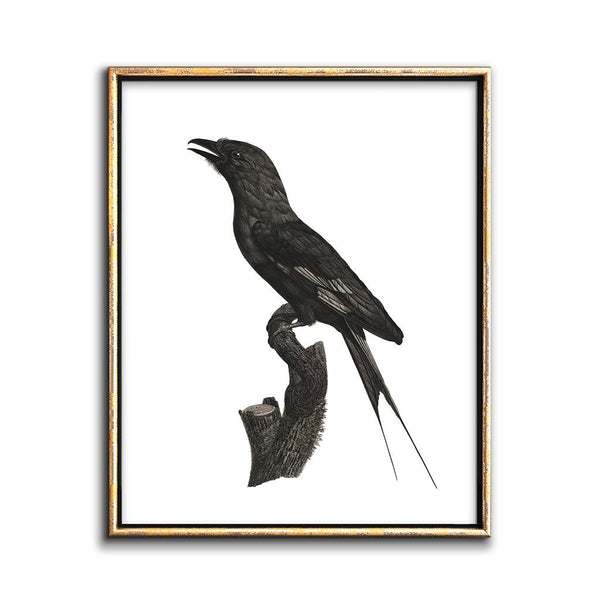 blackbird wall art black and white gallery wall artwork