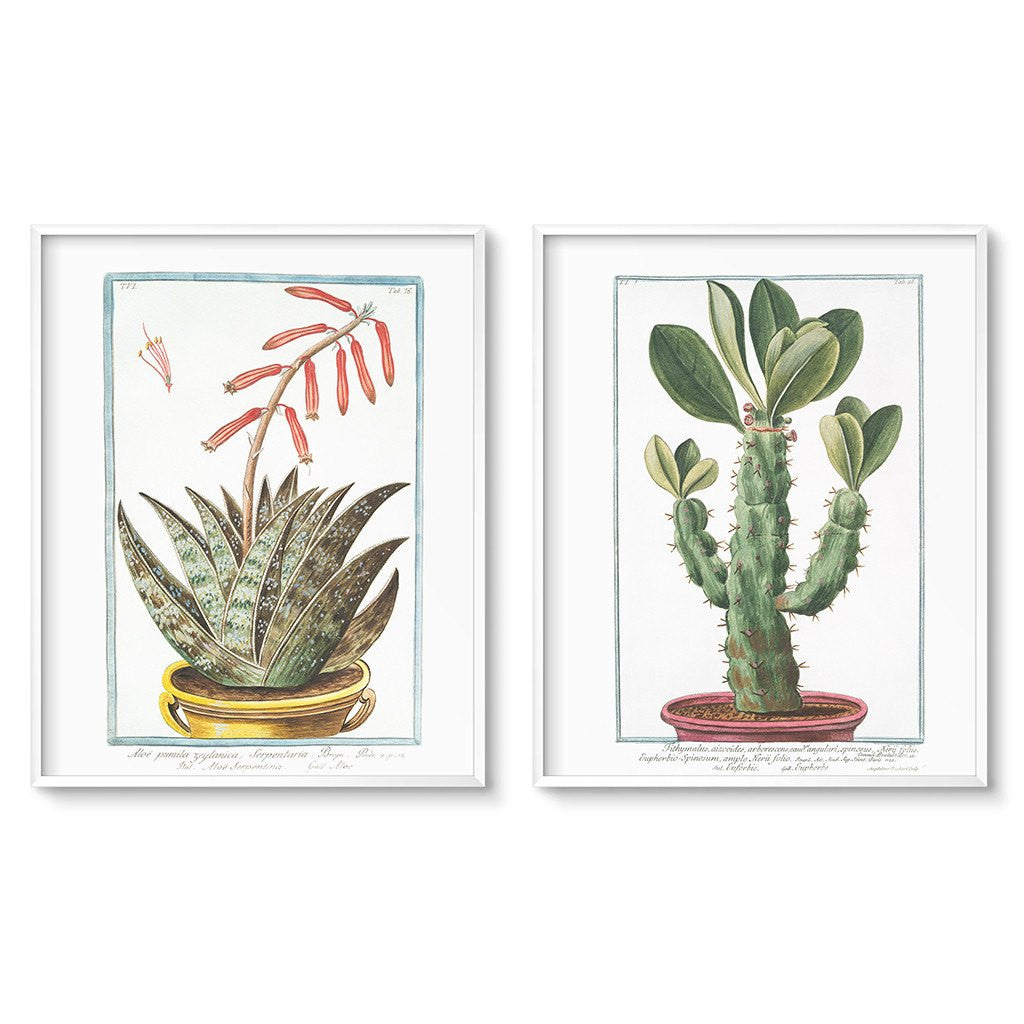 vintage botanical illustration cactus print set