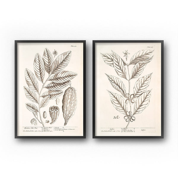 vintage botanical print set kitchen wall decor