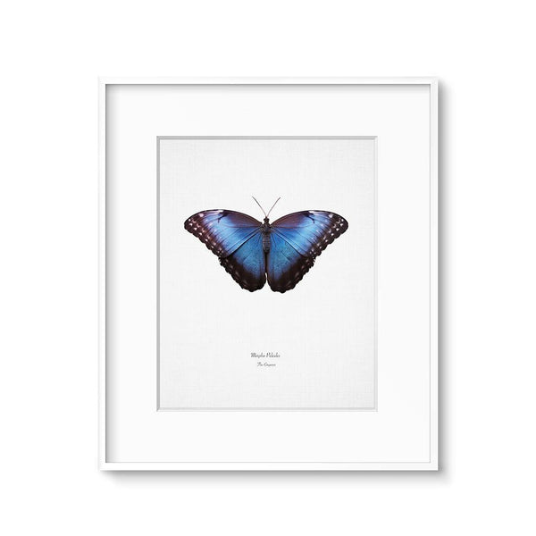 blue butterfly art printable