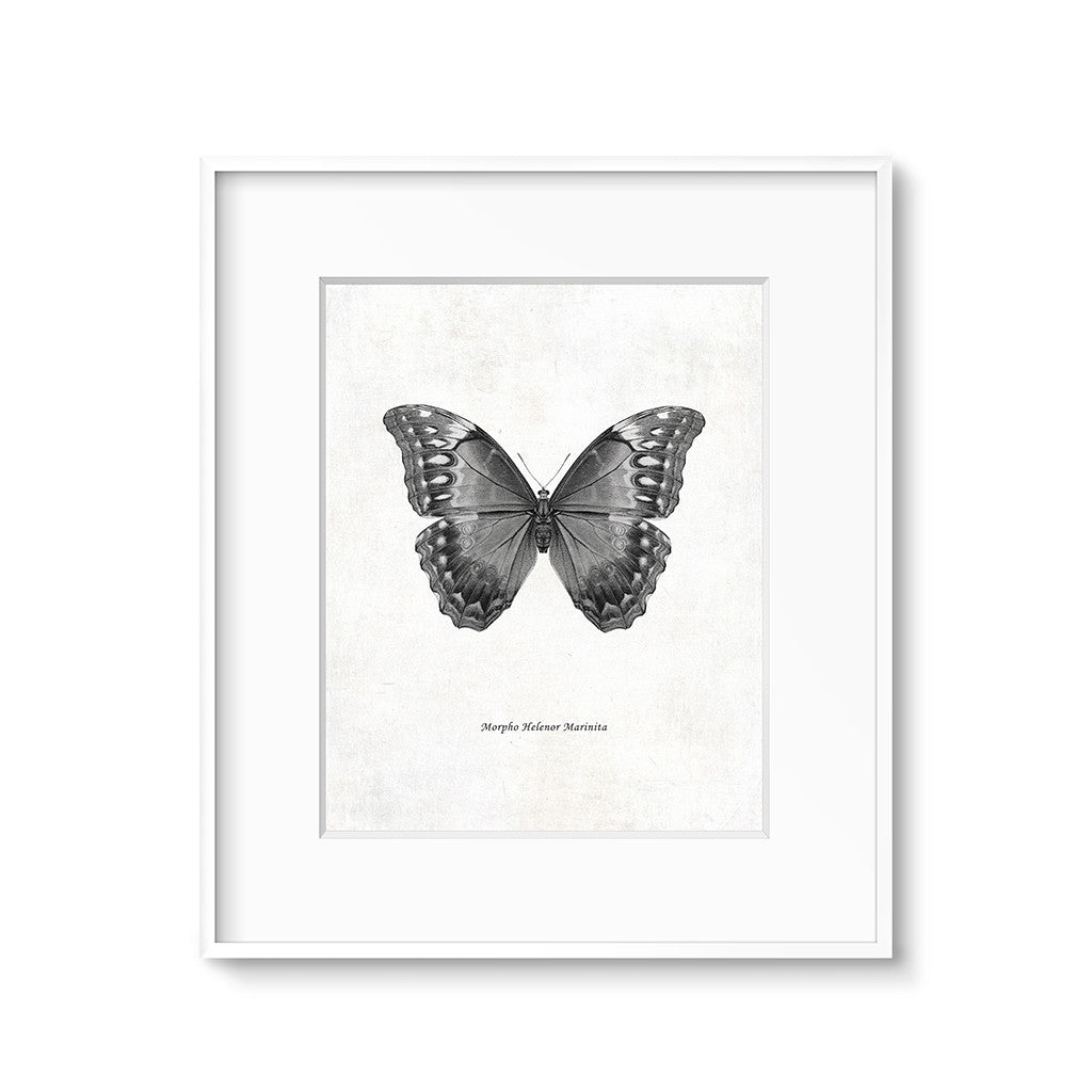 vintage butterfly illustration wall art printable