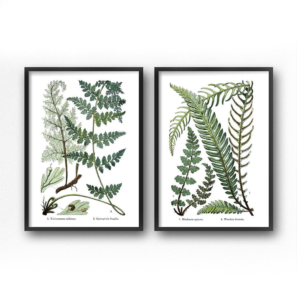 vintage fern botanical illustrations printable diptych wall art set of 2