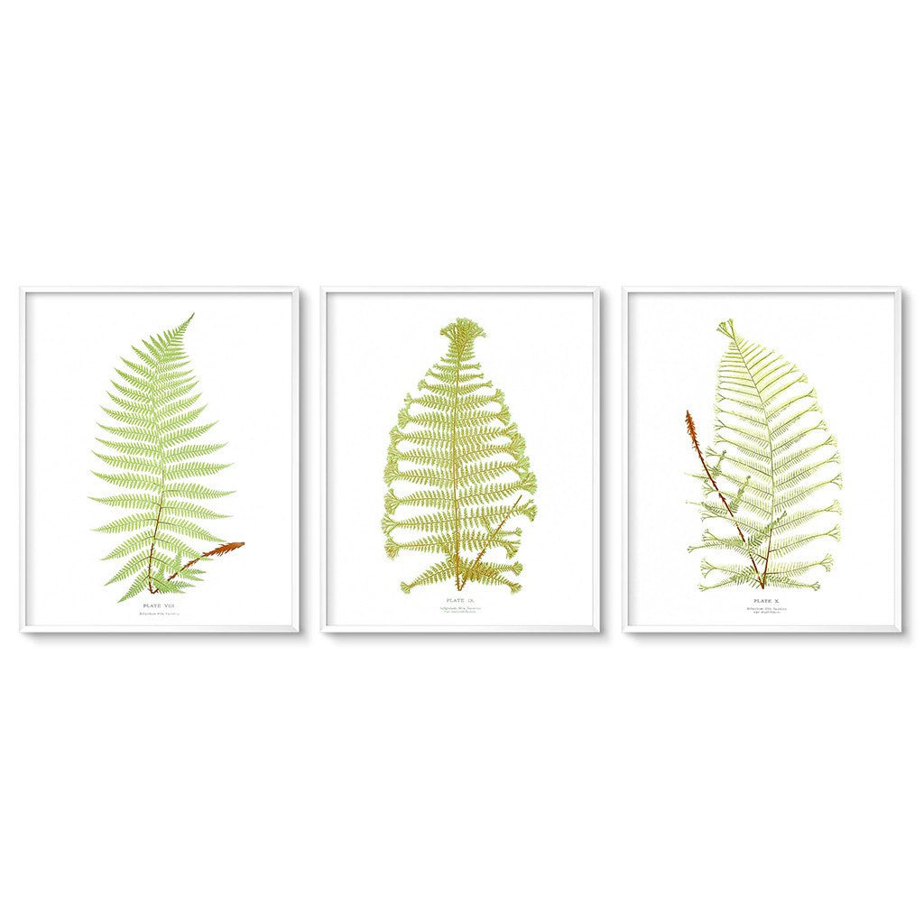 vintage fern botanical prints triptych art printables
