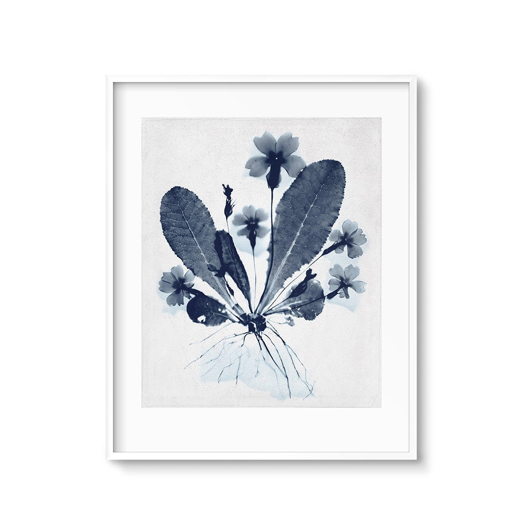 modern botanicals wildflower art printable