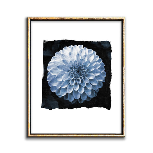 modern botanical print flower cyanotype art