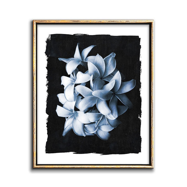 Modern botanical art photograph cyanotype print white flowers