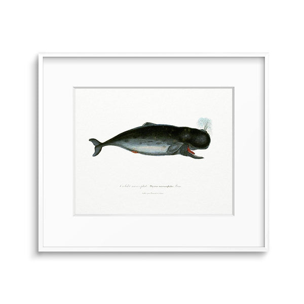 whale print nautical bathroom wall decor