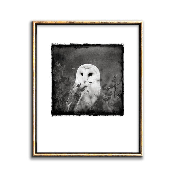 owl art black and white print