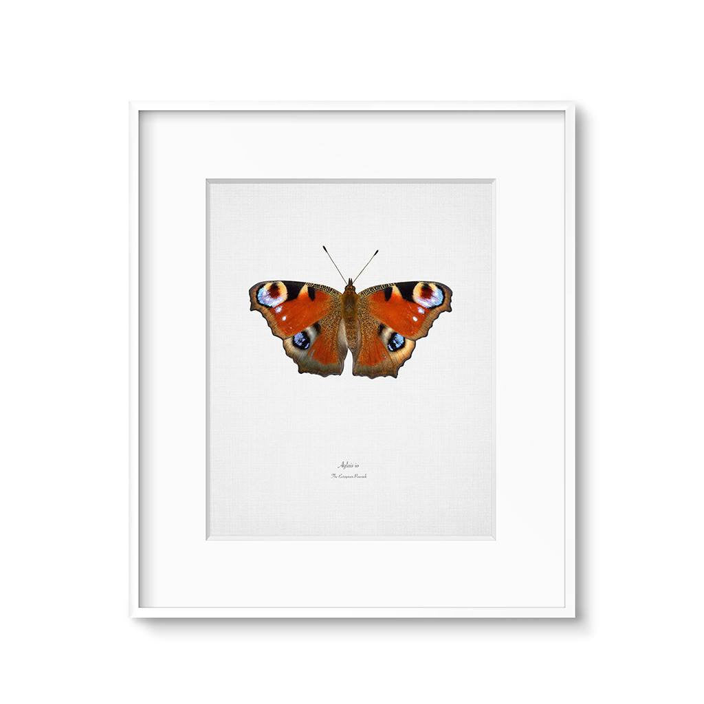 red peacock butterfly wall art print