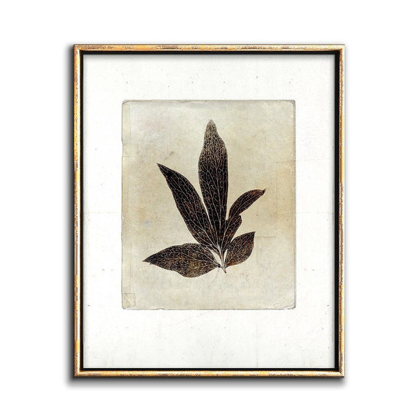 sepia botancal art print rustic wall decor
