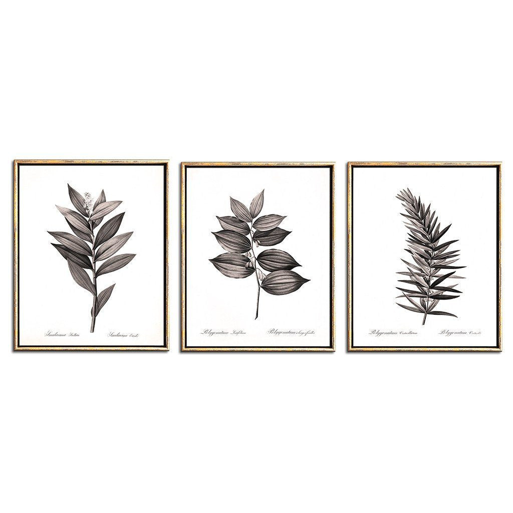 sepia botanical prints set of three Solomon's Seal wildflowers